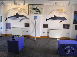Skeleton display in the Shannon Dolphin and Wildlife Centre